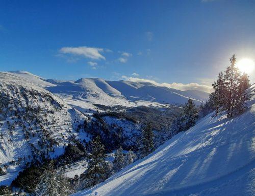 23rd Jan 2021: Tree skiing in Cairngorms powder